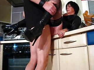 داغ گربه وحشی پشمالو در چرم و چکمه می شود آن را در آشپزخانه
